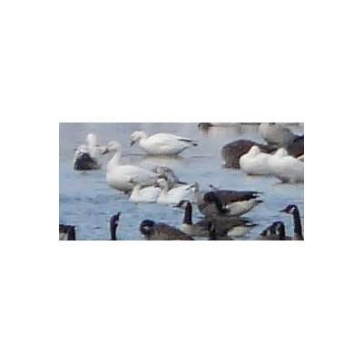 NeilyWorld Bird Photo Gallery Page