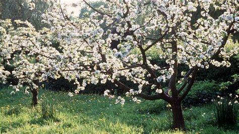 Bäume Für Den Garten Was Eignet Sich Für Wen? Sat1