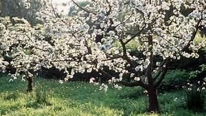 Kleine Bäume Für Den Garten : b ume f r den garten was eignet sich f r wen sat 1 ratgeber ~ Markanthonyermac.com Haus und Dekorationen
