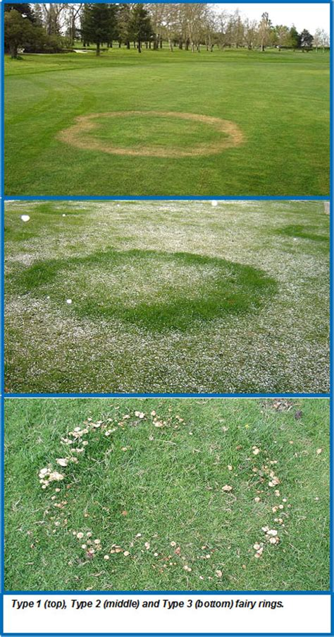 fairy rings wisconsin horticulture