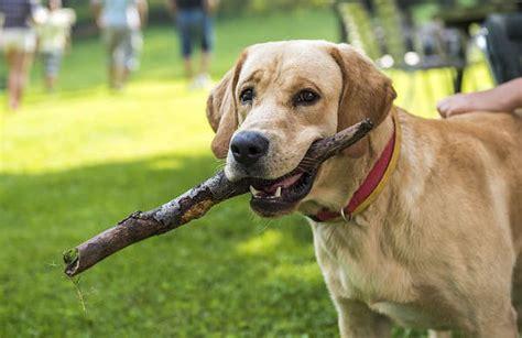 faire sa cuisine promener un chien 10 trucs pour une promenade