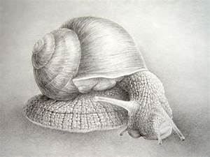 snail by asariamarka on DeviantArt