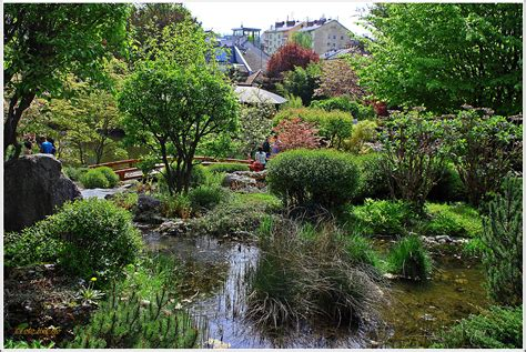 Japanischer Garten Wien Kirschblüte by Japanischer Garten In D 246 Bling Thema Auf Meinbezirk At