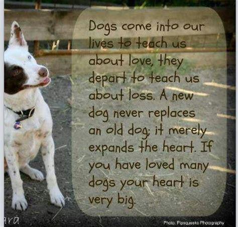 dog quotes pet loss pinterest