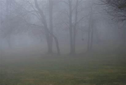 Fog Amazing Lapse Together