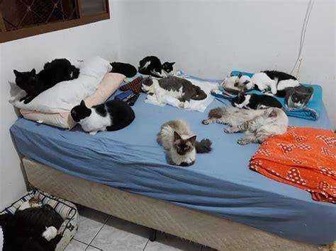 """""""Pizaiada Beneficente"""" irá ajudar abrigo de gatos em São ..."""