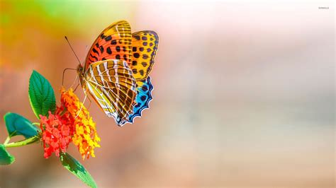 Colourful Animal Wallpaper - colorful butterfly wallpaper animal wallpapers 46510