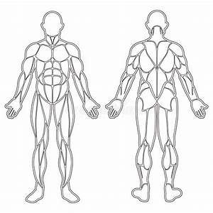 Human Body Muscles Silhouette Stock Vector