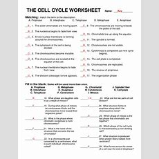12 Best Images Of Life Science Worksheet Answer  Cell Cycle Worksheet Answer Key, Meiosis And