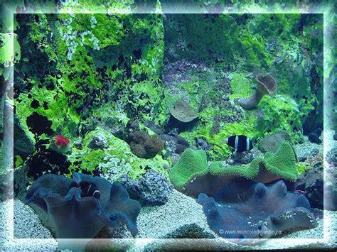fond d 201 cran aquarium