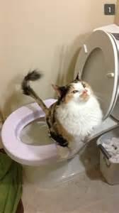 cat pooping litter box review 3 pooplogblog
