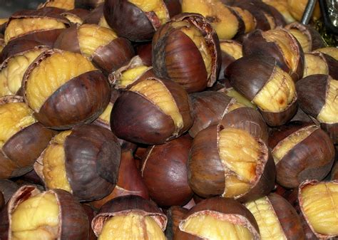 cooking chestnuts dia de sao martinho roasted chestnuts