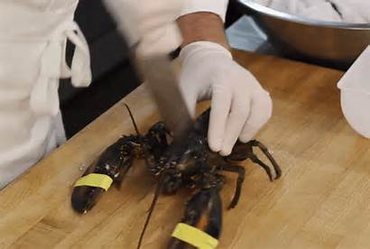 Lobster Lobsters Feel Pain Cooking Kill Chef