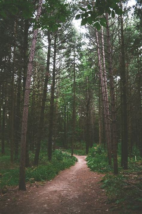 Tree In Woods Wallpaper forest tree path in woods trees the forest in 2019