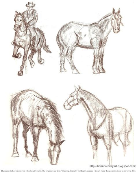 images  horse drawings  pinterest