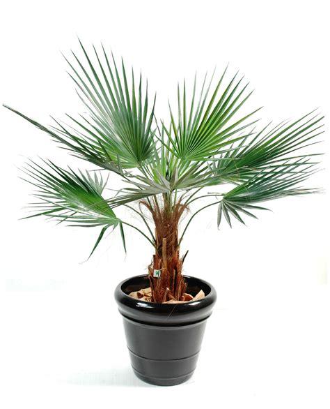 palmier en pot palmier artificiel washingtonia 120 cm 248 00