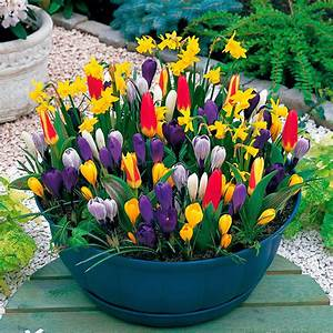 Pflanzkörbe Für Blumenzwiebeln : blumenzwiebel sortiment fr hlingsboten f r t pfe und ~ Lizthompson.info Haus und Dekorationen