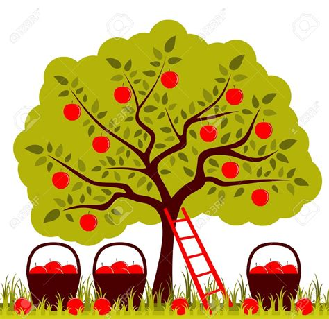 apple orchard illustration orchards clipart clipground