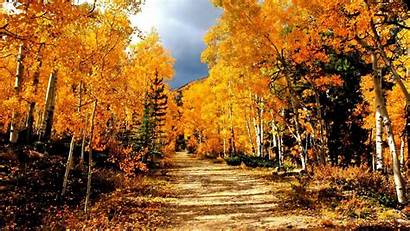 Fall Tree Path Leaves Trail Landscape Forest
