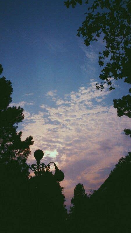 daun lampu awan matahari langit gelap sinar ungu