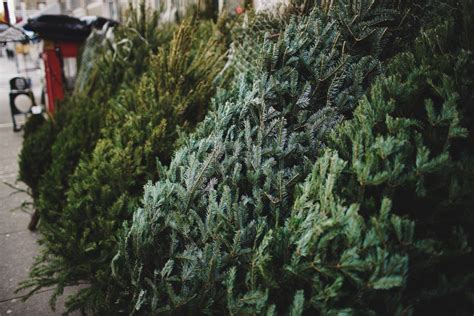 where to buy a real christmas tree in phoenix
