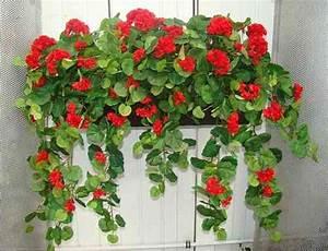 Künstliche Blumen Für Draußen : balkonblumen k nstlich ~ Michelbontemps.com Haus und Dekorationen