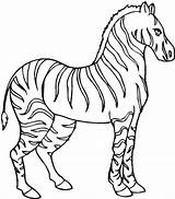Zebra Coloring Stallion Printable Pokemon Beware Disimpan Dari sketch template