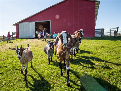 country kitchens with islands farm experiences tourism prince edward island