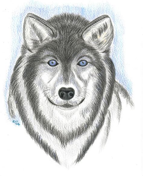 amazing collection  wolf drawingdrawings design
