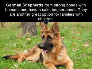 25 best guard dog breeds for your family