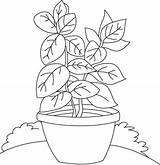 Pages Herbs Shrubs Coloring Basil Herb Colouring Drawing Spices Printable Vase Results Getdrawings Picolour sketch template
