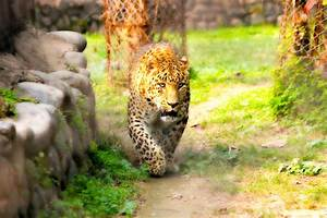 Free Images   Nature  Texture  Animal  Wildlife  Wild  Zoo