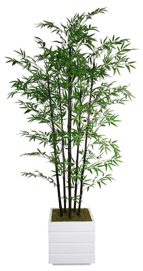 bamboo tree plant tall bamboo tree in planter planters water damage and home