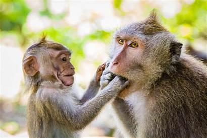 Monkey Forest Ubud Sacred Indonesia Bites Sanctuary