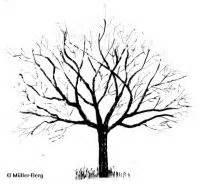 Linde Baum Steckbrief : holz apfel details baumbestimmung laubh lzer bestimmen malus sylvestris ~ Orissabook.com Haus und Dekorationen