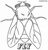 Fly Coloring Pages Printable Sheet Insect Print Getcolorings sketch template