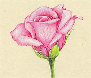 Pencil Colour Drawing Of Flowers How To Draw A Flower With ...