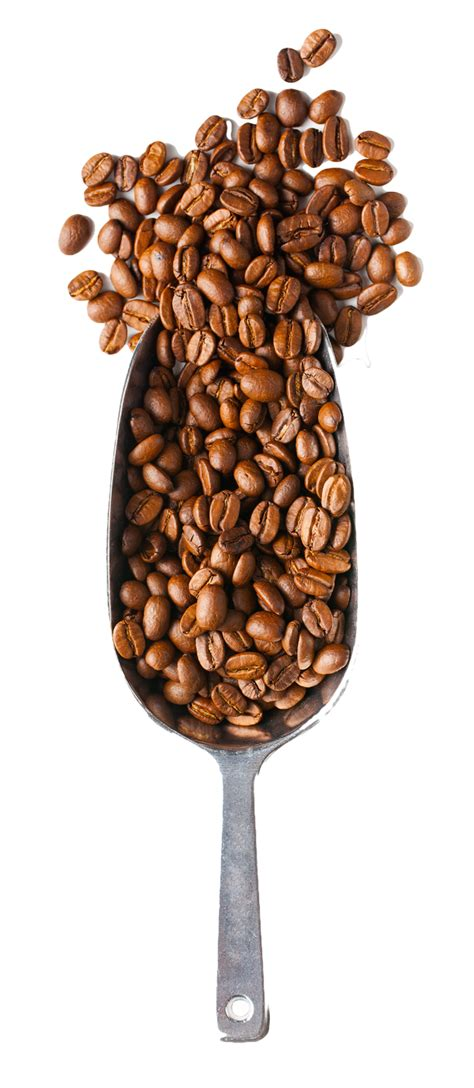 Are you searching for coffee powder png images or vector? SMS - Our Coffee