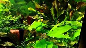 Aquarium Led Beleuchtung : aquarium pflanzenwachstum unter led beleuchtung doovi ~ Frokenaadalensverden.com Haus und Dekorationen