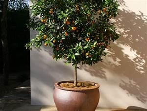 Arbre En Pot : arbre sur terrasse amazing ambiance with arbre sur ~ Premium-room.com Idées de Décoration