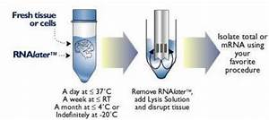 Rna Later  U2122 Stabilization Solution With Manual