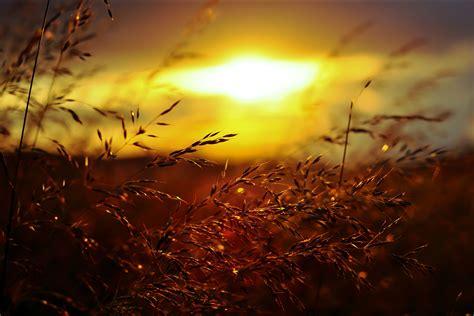 sunset grass golden hour nature summer wallpapers hd