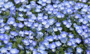 Blau Blühender Bodendecker : schattenpflanzen ziergarten ~ Frokenaadalensverden.com Haus und Dekorationen