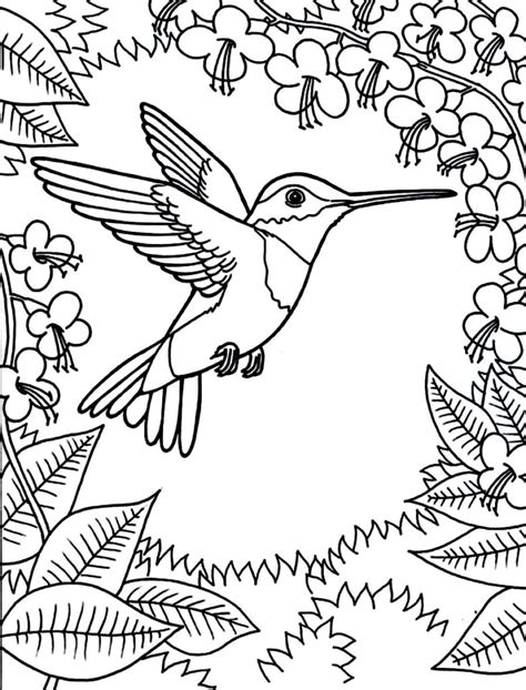 Coloring Pages Printable Hummingbird Coloring Pages