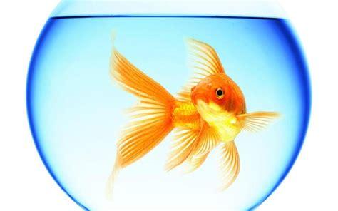 achetez en gros aquariums ronde en ligne 224 des grossistes aquariums ronde chinois aliexpress