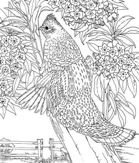 hard coloring page coloring page book  kids
