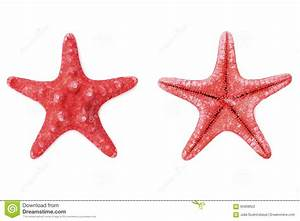 Photo Collection Free Download Red Starfish