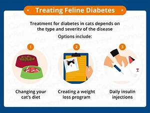 Diabetes in Cats: Causes, Symptoms, & Treatment | Canna-Pet