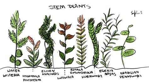 underwater plants drawing  getdrawingscom