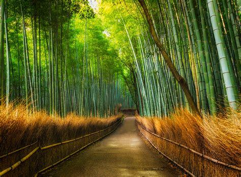 wall mural bamboo path wallsorts